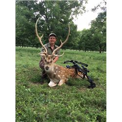 Texas Big Game Hunt for 1 Hunter - $3,400