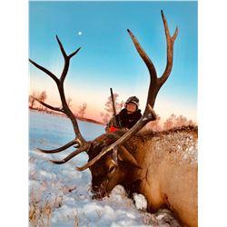 Alberta Elk Hunt