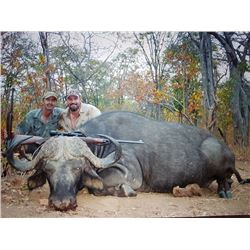 Mozambique Free Range Cape Buffalo Hunt