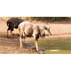 Two Nyala Adventure for Two Hunters