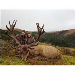 Red Stag Hunt New Zealand