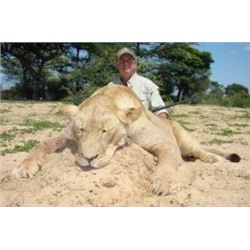 7 Day Lioness Hunt in the Kalahari