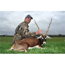Texas Blackbuck Hunt