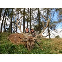 Scotland Red Stag Hunt