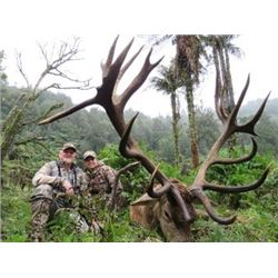 New Zealand - Kuranui –Silver Medal Red Stag
