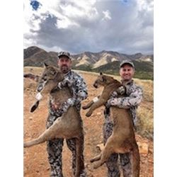 5-DAY ARIZONA COUES DEER AND MOUNTAIN LION HUNT FOR 2 HUNTERS WITH DIAMOND OUTFITTERS