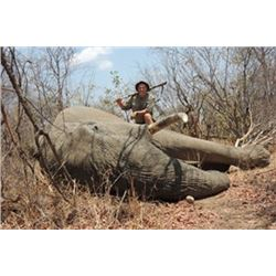 Zimbabwe - Mokore Safaris – Tuskless Cow Elephant
