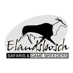 Golden and Blue Wildebeest Safari