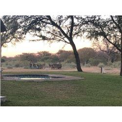 Predator Hunt Limpopo Province