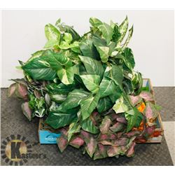 FLAT OF ARTIFICIAL PLANTS AND HANGERS.