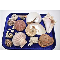 Selection of vintage collectible sea shells and dried sea urchins
