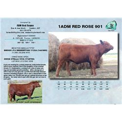 Lot - 7 - 1ADM RED ROSE 901