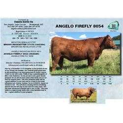 ANGELO FIREFLY 8054