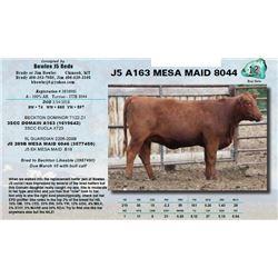 Lot - 12 - J5 A163 MESA MAID 8044