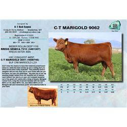 C-T MARIGOLD 9062