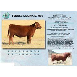 FEDDES LAKINA E7-902