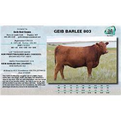 Lot - 24 - GEIB BARLEE 803