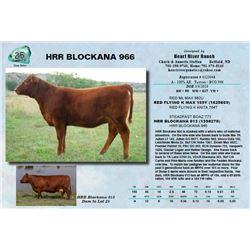 HRR BLOCKANA 966
