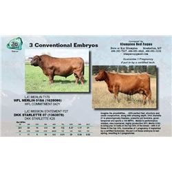Lot - 26 - 3 Conventional Embryos