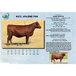 KCC JOLENE F66