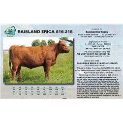 Lot - 44 - RAISLAND ERICA 816-218
