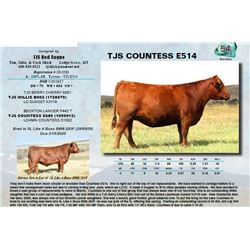 Lot - 54 - TJS COUNTESS E514