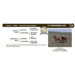 CC MONTANA CAT