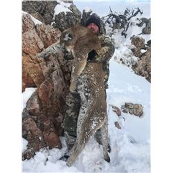 5-Day Mountain Lion Hunt