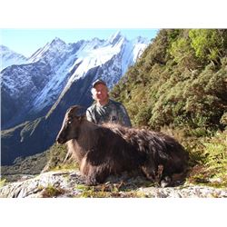 5 Day Alpine Tahr Hunt in New Zealand