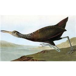 c1946 Audubon Print #377 Limpkin
