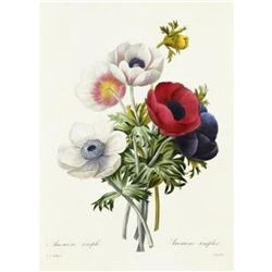 After Pierre-Jospeh Redoute, Floral Print, #7 Anemone simple