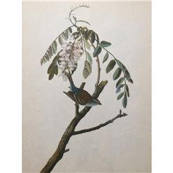 c1946 Audubon Print, #104 Chipping Sparrow