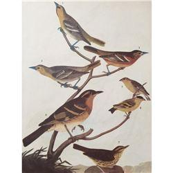 c1946 Audubon Print, #433 A Featured Pot-Pourri (Orioles & Thrushs)
