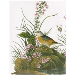 c1946 Audubon Print #130 Grasshopper Sparrow