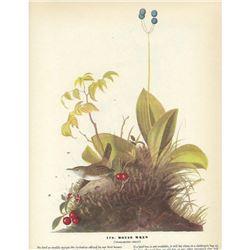 c1946 Audubon Print #179 House Wren