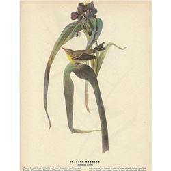 c1946 Audubon Print, Pine Warbler