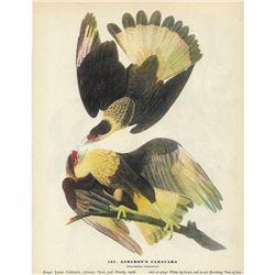 1946 Audubon Print, Audubon's Caracara