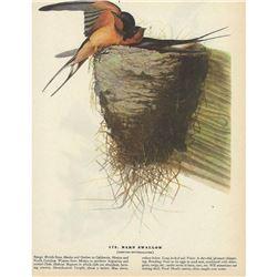 1946 Audubon Print, Barn Swallow