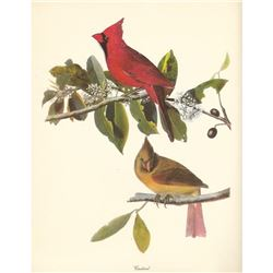 c1950 Audubon Print, Cardinal