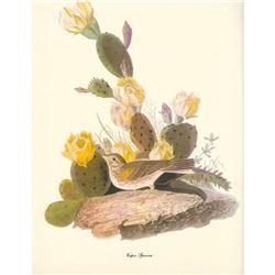 c1950 Audubon Print, Vesper Sparrow
