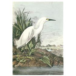 c1946 Audubon Print #242 Snowy Egret