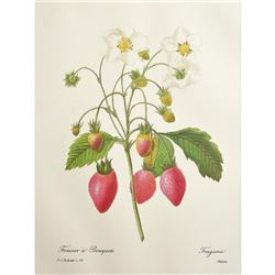 After Pierre-Jospeh Redoute, Floral Print, #39 Fraisier a Bouquets (Strawberry Fruit)