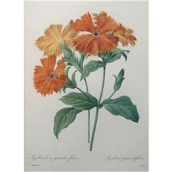 After Pierre-Jospeh Redoute, Floral Print, #75 Lychnide a grandes fleurs (Lychnide-Silene)