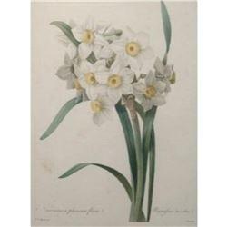 After Pierre-Jospeh Redoute, Floral Print, #84 Narcisse a plusieurs fleurs Var. (Dafodil)