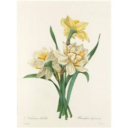 After Pierre-Jospeh Redoute, Floral Print, #82 Narcisses doubles (double Daffadil)
