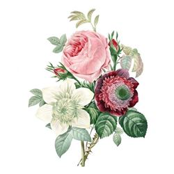 After Pierre-Jospeh Redoute, Floral Print, #125 Rose, Anemone, Clematite
