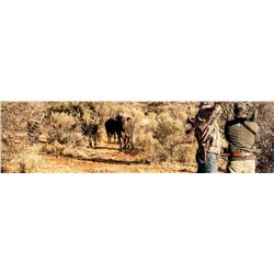 5-Day South Africa Cape Buffalo Package