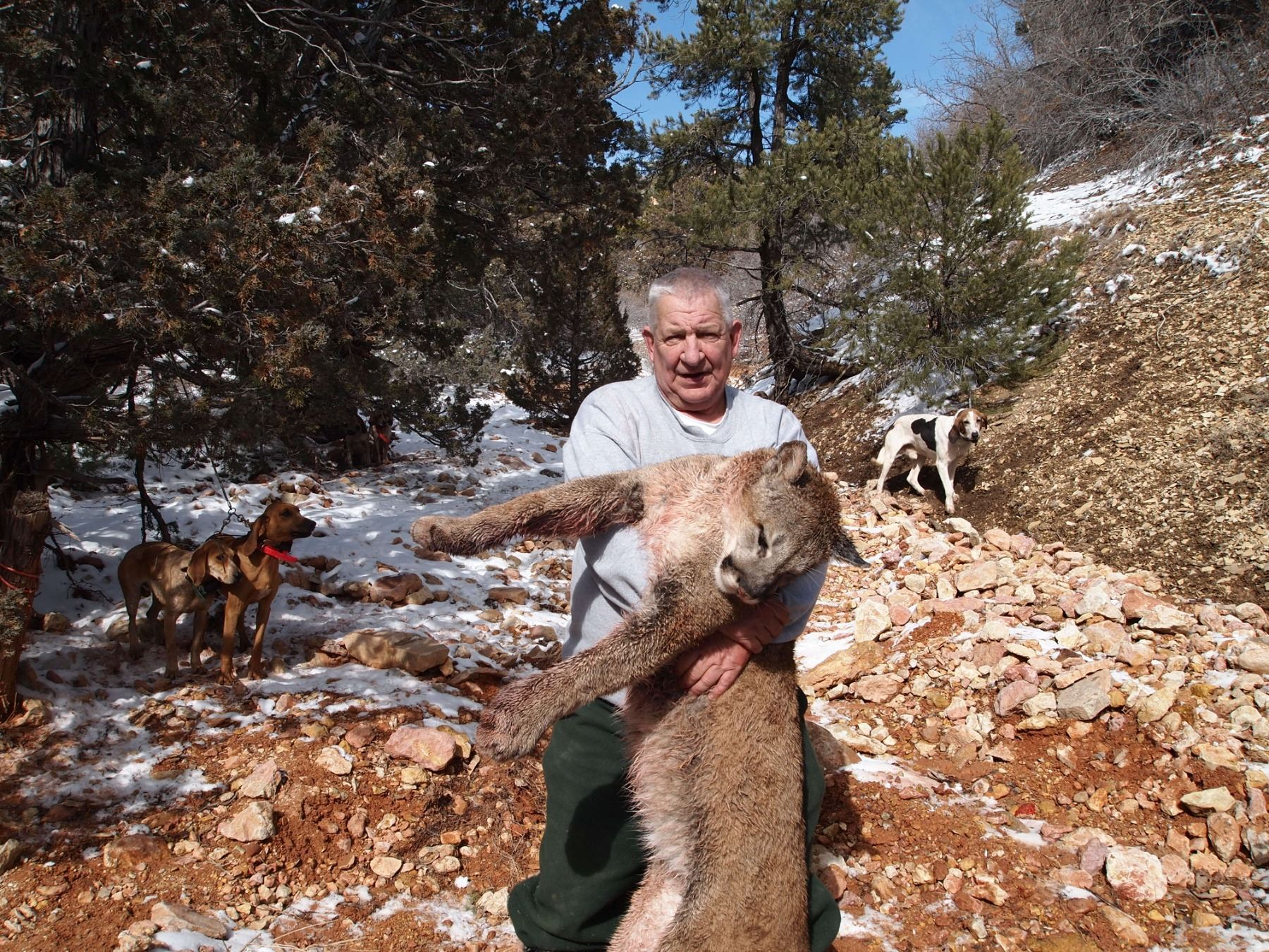 Utah Mountain Lion Hunt for 2 Hunters with Pine Valley ...