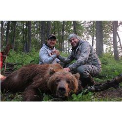 Alaska Brown Bear Hunt for 1 Hunter