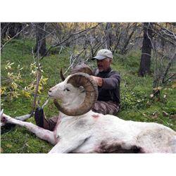 Hunters choice of Alaska Dall Sheep or Alaskan Yukon Moose Hunt